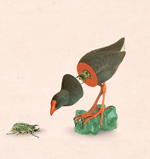 illustrazioni di Julia Geiser